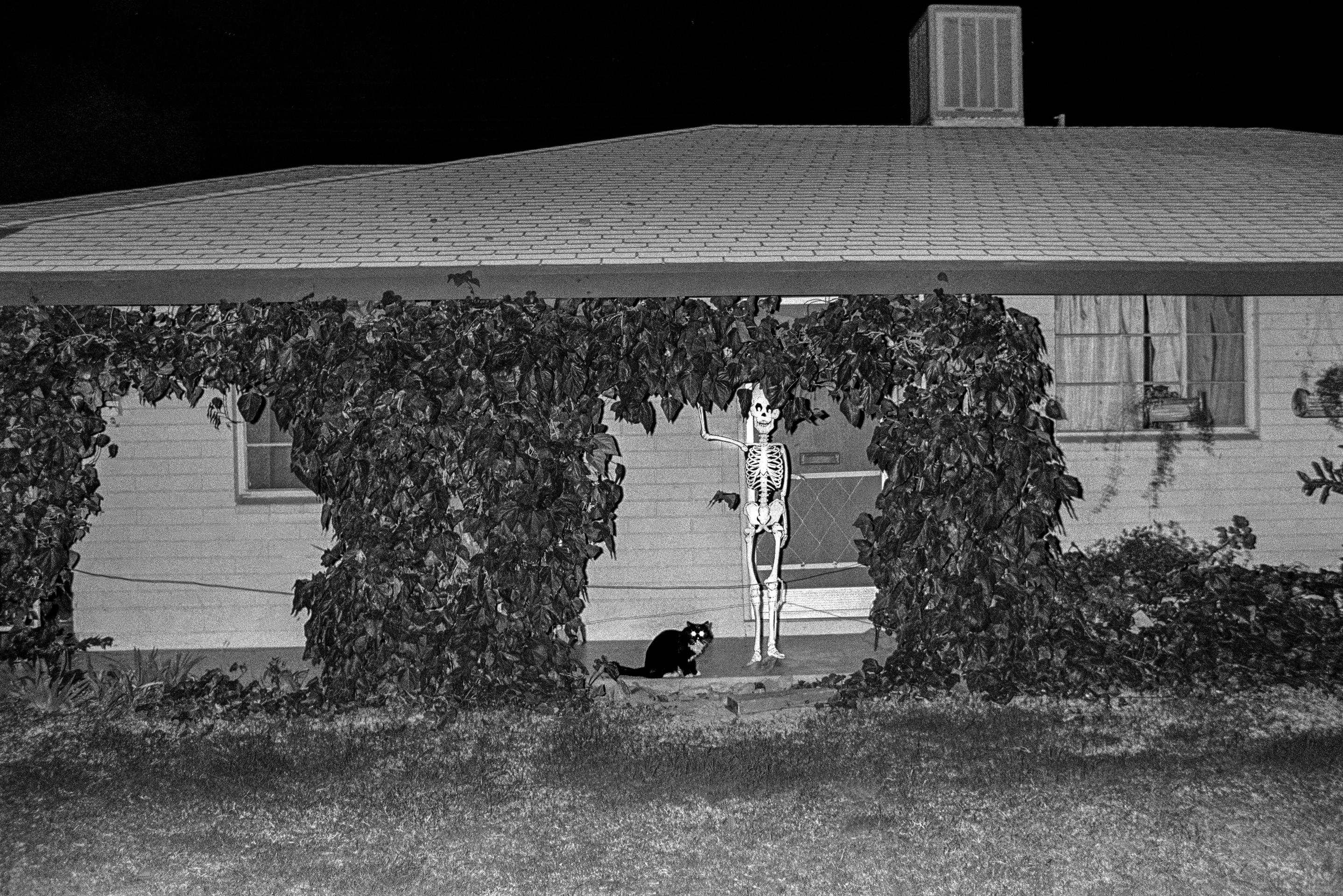 Open the image &lsquoUSA. ARIZONA. Tempe. Surreal pair guard a house during Halloween in Tempe, Arizona. 1979.'