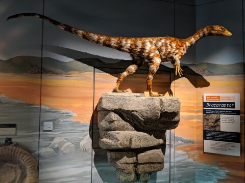Model of Dracoraptor