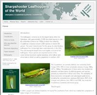 Sharpshooter Leafhopper Database